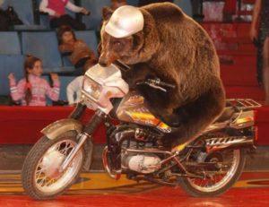 zzz tw bear